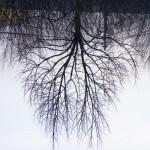 albero bronchiale